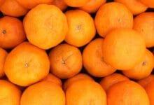 هل يستطيع كلبي أكل البرتقال