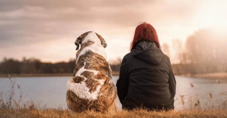 13 حقيقة عن الكلاب الأكثر إخلاصًا لمالكيها