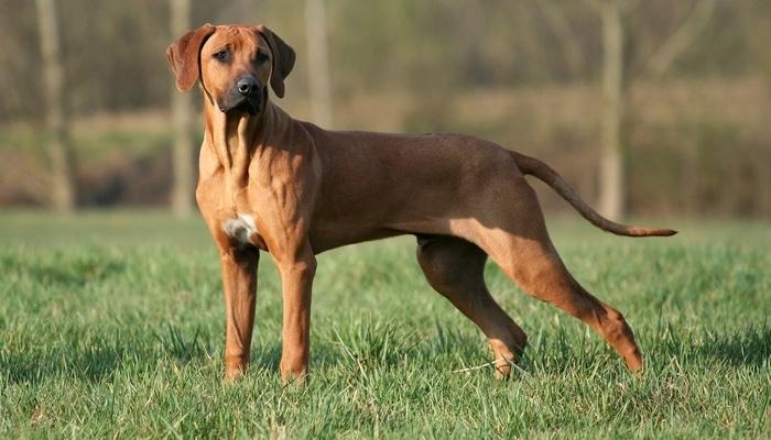 أقوى الكلاب في العالم من بين الخيارات الأفضل لك