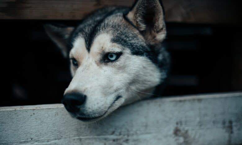 الحساسية عند الكلاب وكيفية التعامل معها