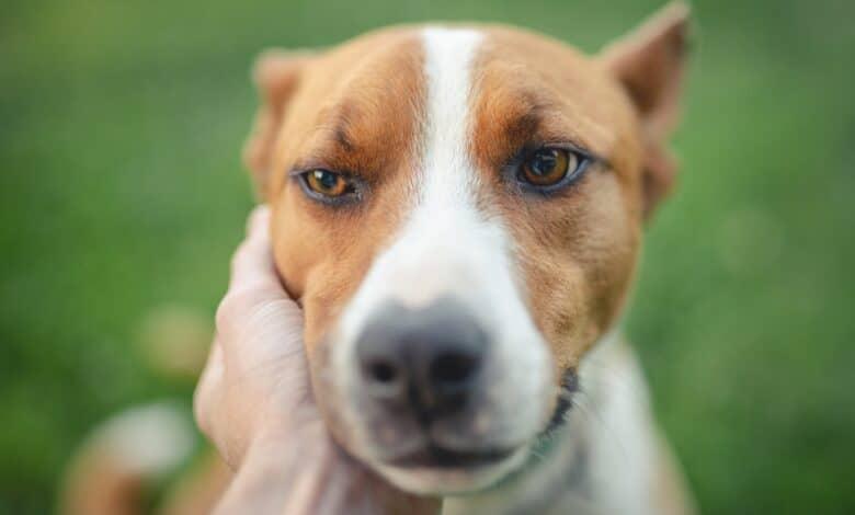 القلق عند الكلاب ومحاولة فهم أسبابه للتحكم فيه
