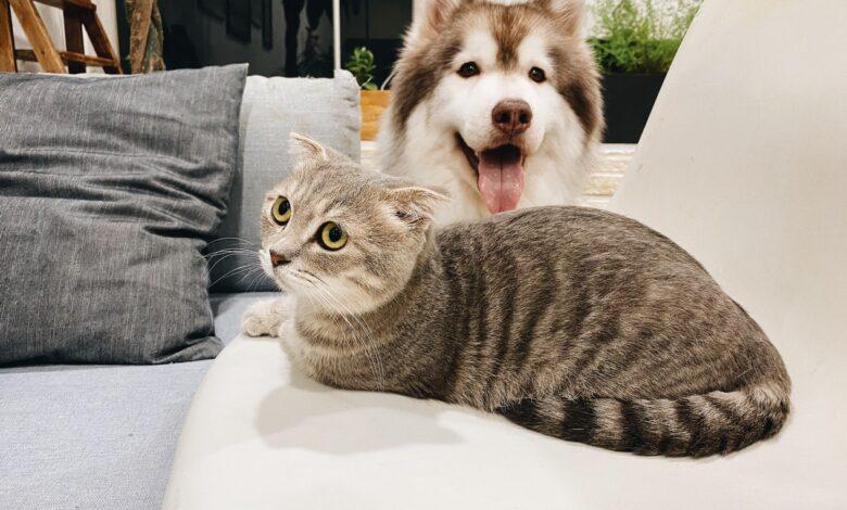 الكلاب التي تتماشى مع القطط دون مشاكل