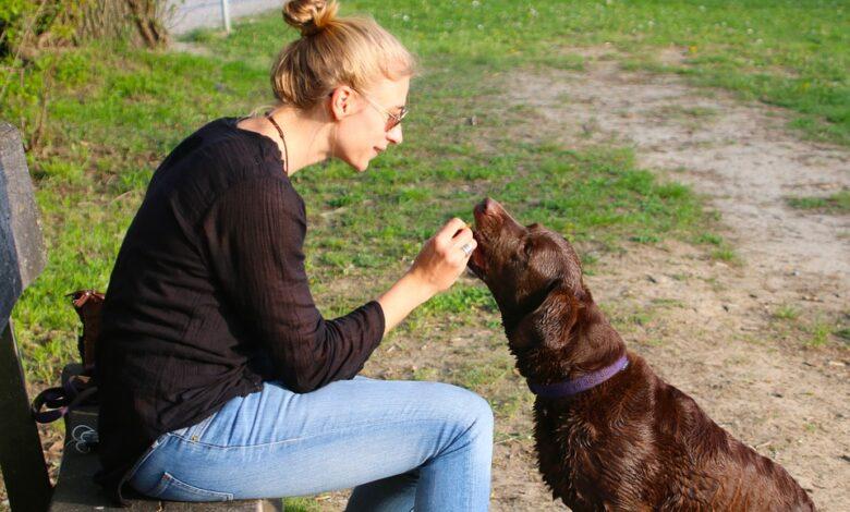 تغذية الكلب حسب عمره بما يتوافق مع نوع الأطعمة