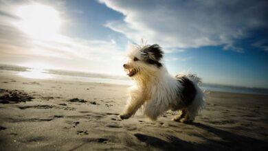 سلالات الكلاب الأكثر عمرا مع صحة جيدة