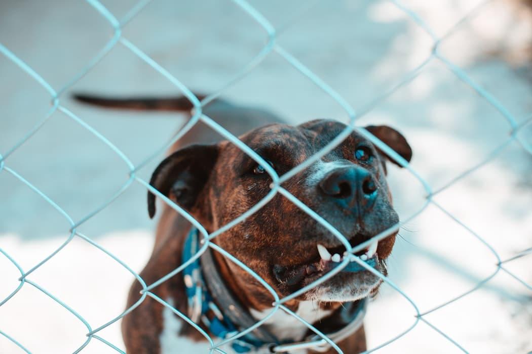عدوانية الكلاب عبر عدة حالات تقتضي التدخل لحلها