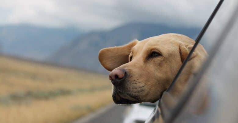 كلاب السفر التي تمنحك رفقة ودية في رحلاتك