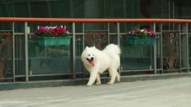 أجمل الكلاب في العالم
