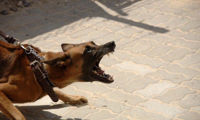 الكلاب الشرسة