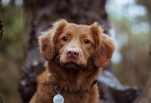 تدريب الكلب على التبرز في الخارج لتعزيز سلوك النظافة لدى رفيق المنزل