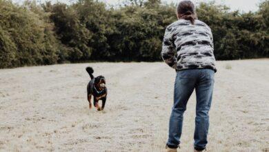 تدريب الكلب على تلبية النداء