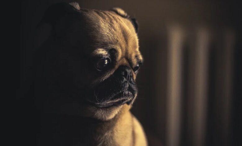 كلبي غير سعيد