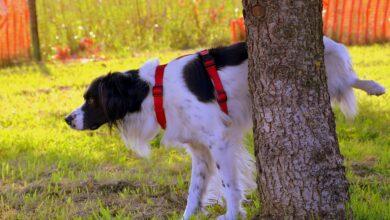 كلبي يتبول ويتبرز في كل مكان