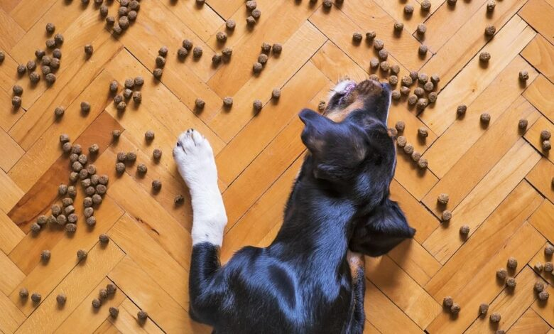 كيفية إختيار أكل الكلب