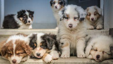 أسماء كلاب