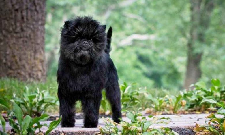أفين بنشر كلب صغير