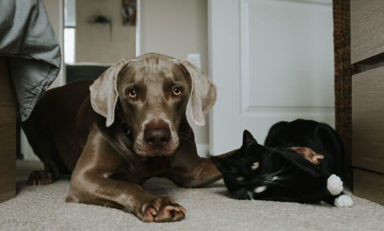 تدريب الكلب على عدم مطاردة القطط