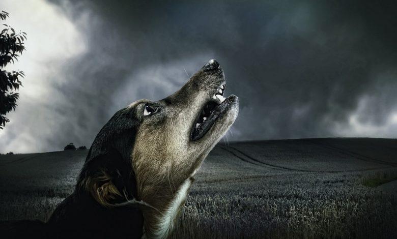 صوت الكلاب