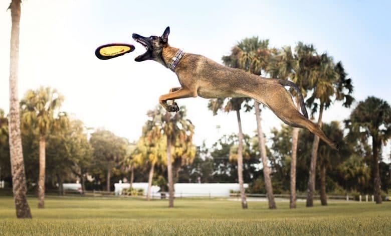 كيف تختار الرياضة المناسبة لكلبك