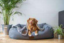 التخلص من رائحة الكلاب الكريهة