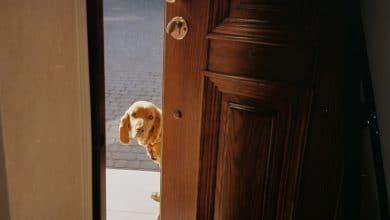 تدريب الكلب على فتح الباب وإغلاقه