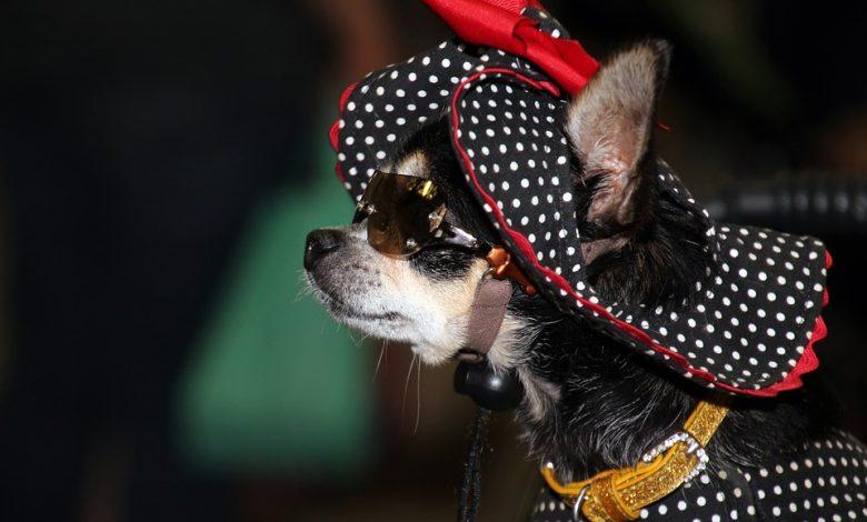 قبعة الكلب
