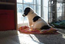 تدريب الكلب أن يكون بمفرده