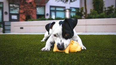 الإضطرابات السلوكية عند الكلاب