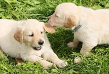 تبني كلب أو كلبة