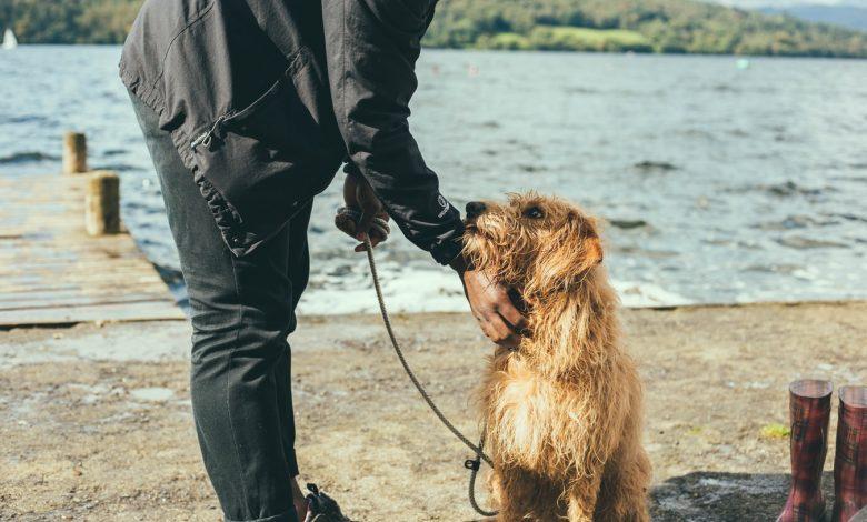 طرق تدريب الكلاب