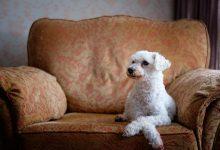 كلاب لمرضى الحساسية