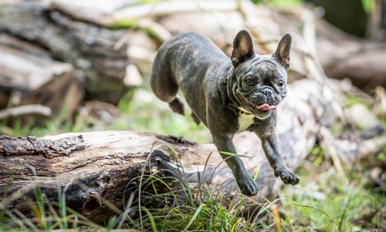 كلب مفرط النشاط