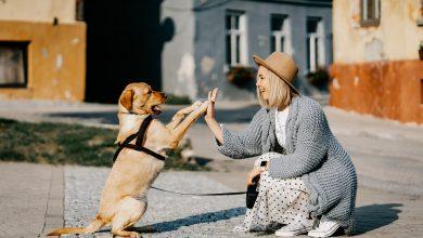 كيفية التحدث مع الكلب