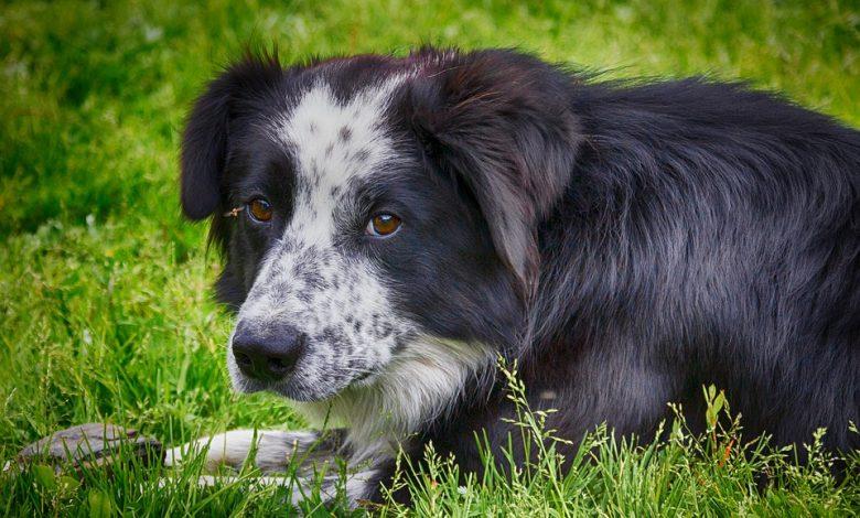 إضطرابات الأكل عند الكلاب